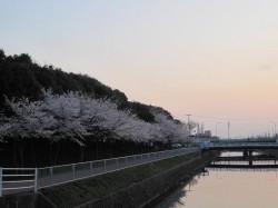 2010.津田公園 桜 ④
